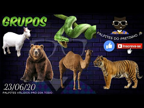 PALPITES JOGO DO BICHO 23/06/2020 PRETINHO JB