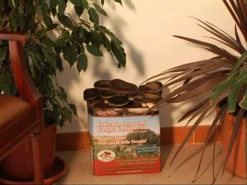 Lanalisi su un fungo di unghie in Mosca
