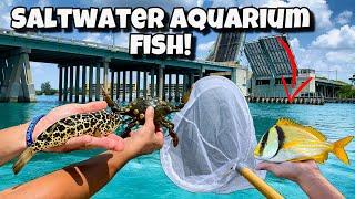 Catching EXOTIC AQUARIUM Fish!! *Crazy*