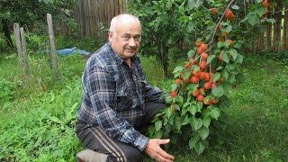 Садовод В.Железов - руки прочь от деревьев – они живые!