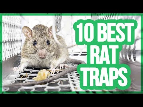 Best electric mouse trap 12v battery / Best water rat trap