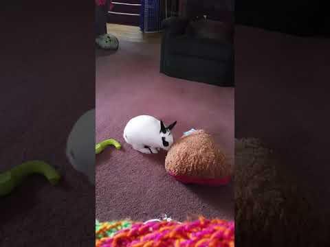 Maisy, an adopted Bunny Rabbit in Saint Paul, MN