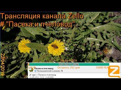 """Трансляция канала Zello """"Пасека и пчеловод"""". (Обзор за день) 22/04/2019"""