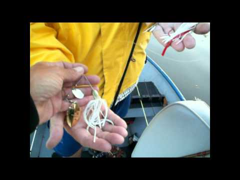 Spinnerbait Tips for Late Fall Bass