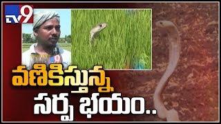 Farmers fear snake bites in Krishna, West Godavari districts - TV9
