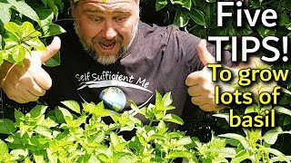 5 Tips How to Grow a Ton of Basil in One Container or Garden Bed