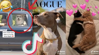 2020 july funny cute tik tok animals compilation