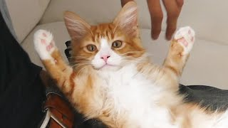 Best of Haku ♡ From kitten to weird cat! - Video Youtube