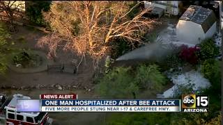 Man hospitalized after bee attack in Phoenix