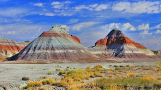 The Ancients Of The Petrified Forest - Arizona