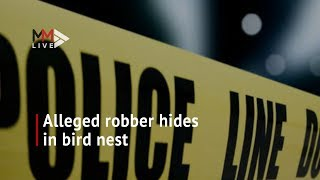 Robber discovered hiding in bird's nest after manhunt