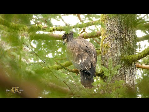 Teaser: Demo trailer for compilation of British-Columbia nature...