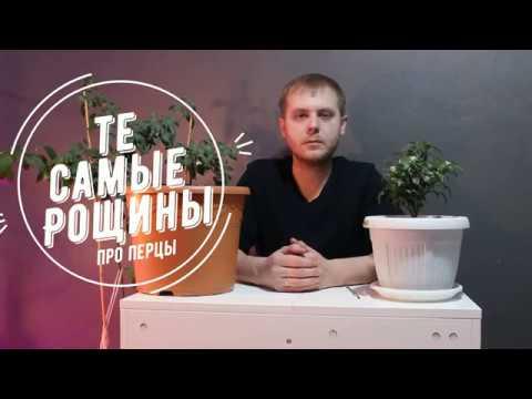 Выращивание перца в домашних условиях