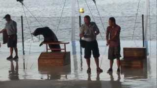 Stupid Guy Immitating Sea Lion Falls Into Pool - Hillarious
