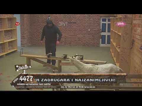 Zadruga - Miki se iznervirao i zbog koze - 22.02.2018.