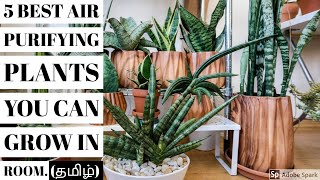 5 Air Purifying Plants For Your Bedroom/ Living Room | காற்றை சுத்தப்படுத்தும் செடிகள்