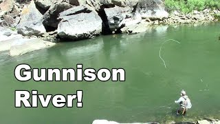 Gunnison River Colorado - Fly Fishing Tailwater of the Blue Mesa Reservoir - McFly Angler Episode 27