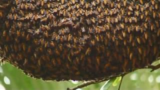 honey hunting in nepal scaring documentary wild