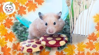 Download 🌿rainforest Hamster Cage Theme New Diy Cage Mp3