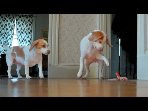 Dogs Rescue Sister from Toy Snake Attack