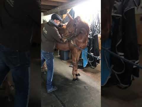 Come usare il prodotto sul cavallo - la spalla