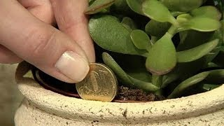 Bury Pennies Around Your Plant And See What Happens