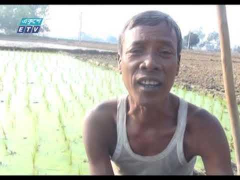 পুরো উদ্যোমে বোরো আবাদে মনোযোগী দিনাজপুরের কৃষকেরা | ETV News