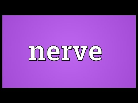 Nerve Meaning