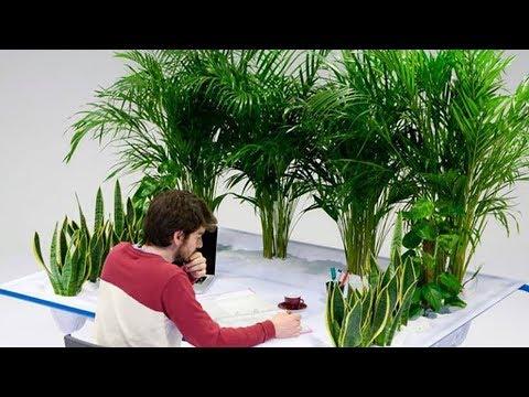 Влияние комнатных растений на человека. Вы знали об этом?