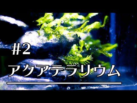 【アクアテラリウム #2】18cm水槽にホウオウゴケをレイアウト