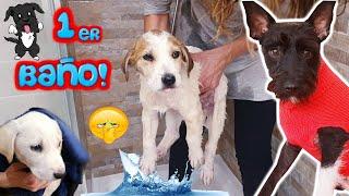 ¡PRIMER BAÑO DE LOS CACHORROS! Tienen ¡MIEDO! 😨Lana Funny Dogs