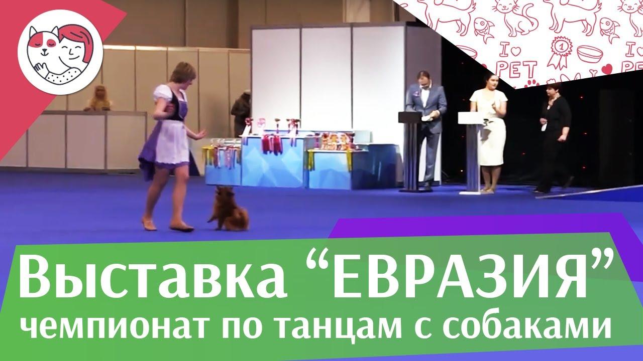 Чемпионат РКФ по танцам с собаками 8 на Евразии 17 ilikepet