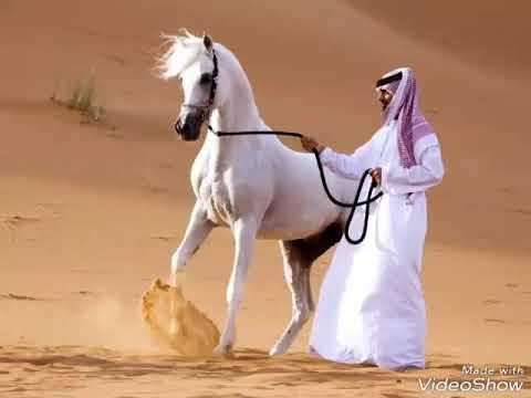 Супер арабские песни 😎🎶☝️☝️