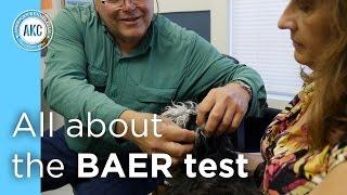 Health Testing: The BAER Test