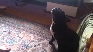 пес без палева срет на ходу