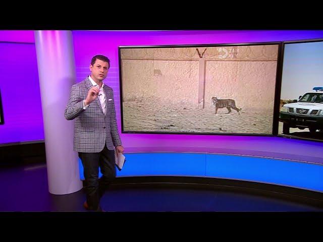 الجزائر: قتل نمر فار من حديقة الحيوان