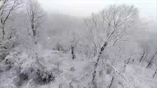Winter Trees From The Air
