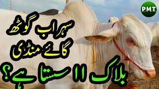 Sohrab Goth Cow Mandi Karachi 2019 Block 16 - Natural Birds