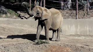 Oakland Zoo Visit, Nov 4, 2018