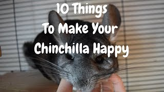 10 Things You Can Do To Keep Your Chinchilla Happy