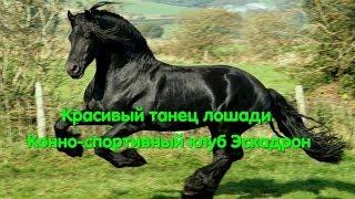 Очень красиво и грациозно. Наездница и конь танцуют. Конно-спортивный клуб Эскадрон. Танцы. Лошадь.