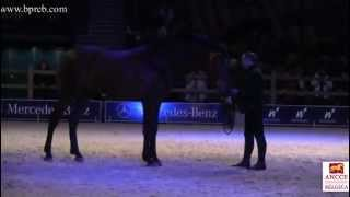 Wallonie Equestre Event 2013
