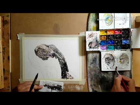 멸종위기종 흰점배무늬수리 그리기