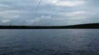 Pêche gros Aprion verdâtre