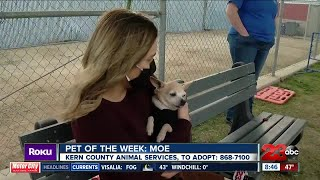 Pet of the Week: Moe
