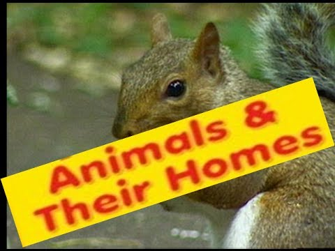Animals Homes  Names, Types - Lesson for Kids -Kindergarten,Preschoolers,Grade 1