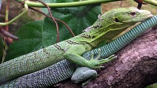 The Reptiles (Part-4) Lizards (Nature Documentary)