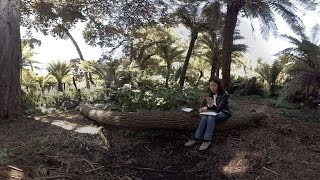 360 Video (in 4K) : Artist Jane Kim Illustrates Golden Gate Park's Entwined Ecologies | KQED