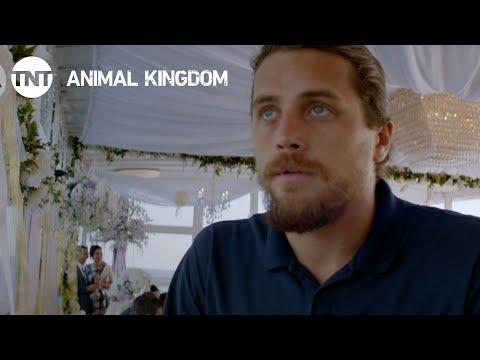 Animal Kingdom 2.10 Preview
