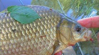 Рыбалка - ассорти. Ловля крупного карася, судака и щуки(сентябрь) My fishing